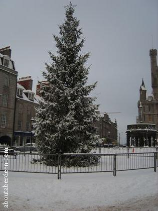 Aberdeen Christmas Tree