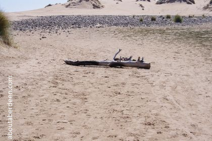 Driftwood in sand by beach