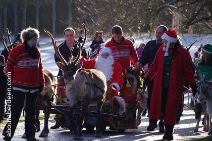 Father Christmas pulled on sleigh by reindeer in woods with snow