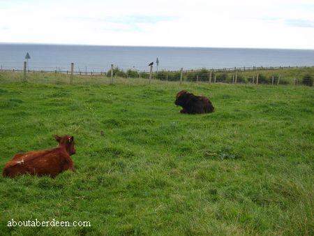 Cattle in a Field by the Sea