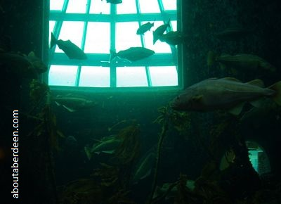 deep living kelp reef