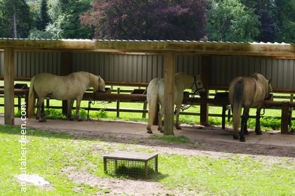horses in stable eating