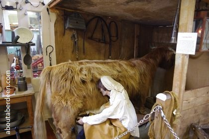 life sized stuffed highland cow