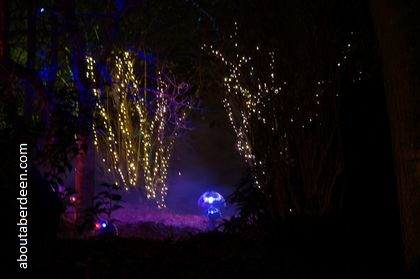 night light show in forest trees