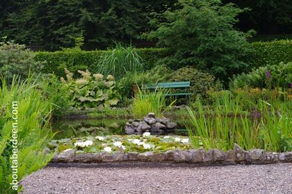 ornamental pond with white water lilies