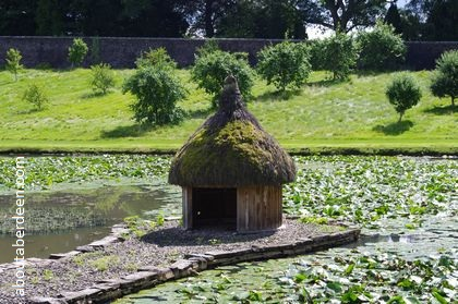 swan and duck hut